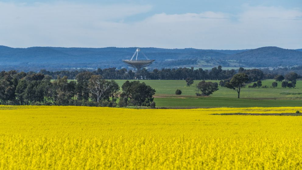Fields of canola growing at a farm with views across to the Parkes Observatory