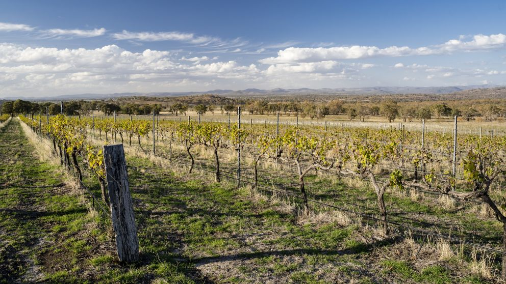Scenic view across the Merilba Estate Wine vineyards in Uralla, Tamworth Area