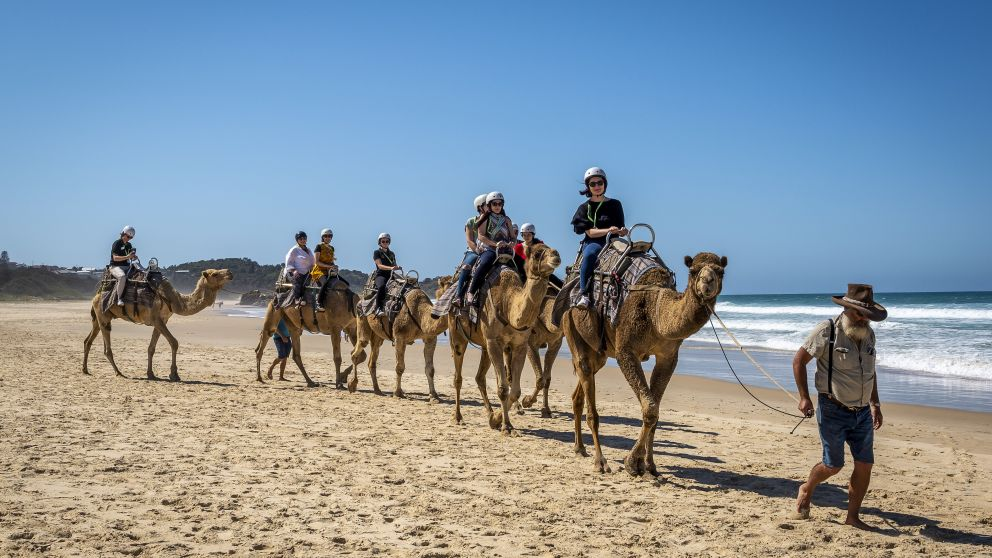 Visitors enjoying a camel experience with Port Macquarie Camel Safaris on Lighthouse Beach, Port Macquarie, North Coast