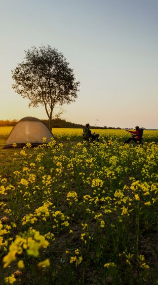 Camping in Canola Fields - NSW