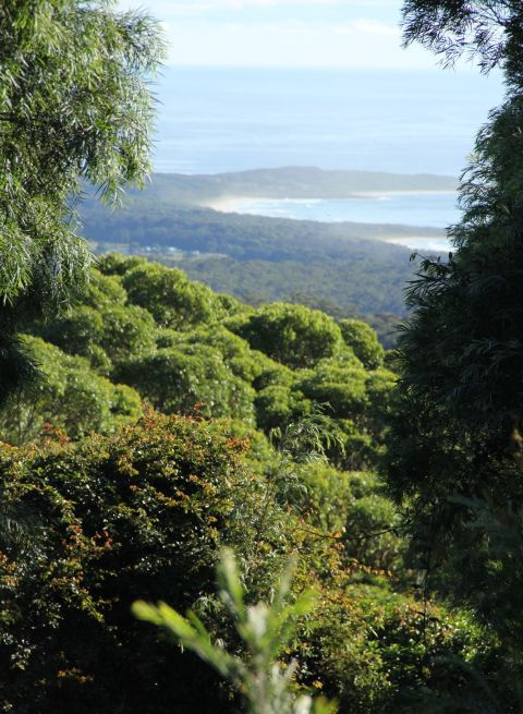 Durras Mountain Walk, above Pebbly Beach area in Shoalhaven area