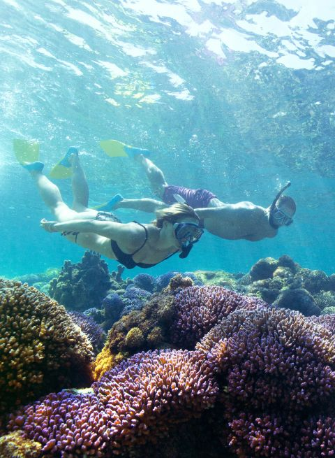 Snorkelling off Lord Howe Island