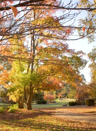 Rustic autumnal colours in the Cowra Japanese Garden, NSW