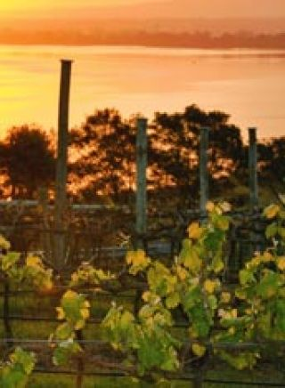 Two figs winery, Shoalhaven at sunset