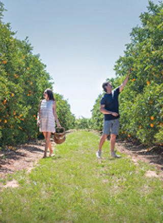Fruit picking at Catania Fruit Salad Farm in the Riverina