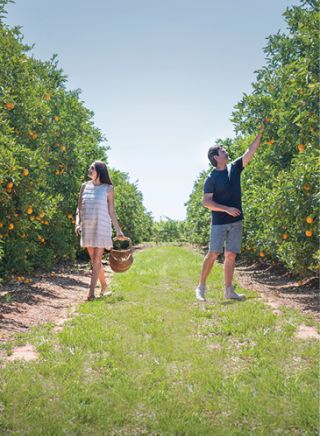 Local Produce and Farmstays - Catania Fruit Salad Farm, The Riverina