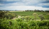 Grove Estate Wines - Hilltops Wine Region