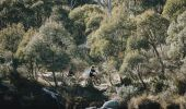 Couple enjoying a day of mountain biking on the Thredbo Valley Track in Kosciuszko National Park, Snowy Mountains