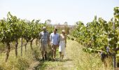 Rosnay Organic Wines - Canowindra