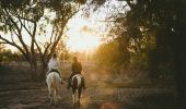 Grays Holler Horse Riding in Lightning Ridge - Outback NSW
