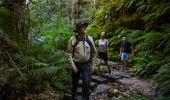 Couple enjoying a guided walk along the Grand Canyon Walking track in the Blue Mountains with Tread Lightly Eco Tours
