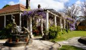 Spring time view of the Wisteria walkway at Norman Lindsay Gallery in Faulconbridge, Katoomba
