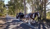Woman enjoying a horse and cart ride at Oaks Cypress Lakes Resort, Pokolbin in the Hunter Valley