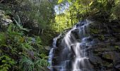 Sylvia Falls - Wentworth Falls - Blue Mountains