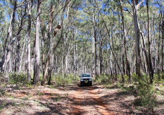 A 4WD vehicle on the Barraba track, Mount Kaputar National Park