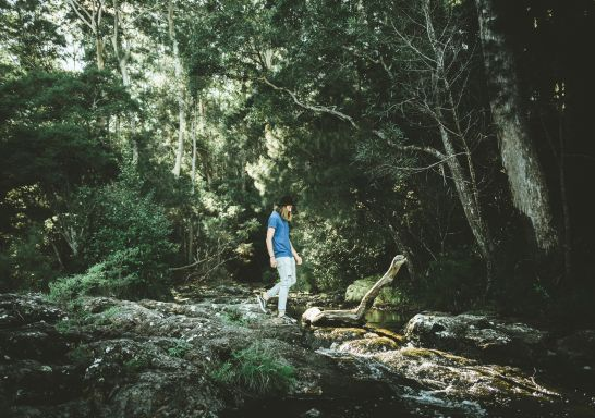 Man enjoying a walk along the Minyon Falls walking track in Nightcap National Park, Whian Whian