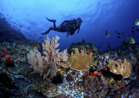 Scuba diver exploring the coral gardens surrounding Lord Howe Island